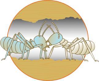 驚異のドミノ効果で巣ごと退治