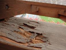 柳井市柳井にてヤマトシロアリ駆除工事。ベタ基礎総檜(ヒノキ)の木造住宅。