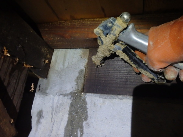 防府市佐野にてヤマトシロアリ駆除。床下からではなく、勝手口の土間下からの被害。のサムネイル