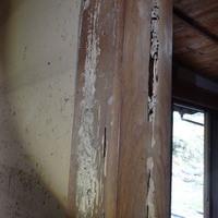 防府市江泊にてヤマトシロアリ駆除。天井裏にまで被害(カンモンシロアリか・・・?)のサムネイル