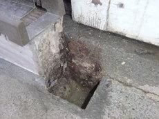 宇部市今村北にて白蟻予防工事。外に一か所だけヤマトシロアリいた。