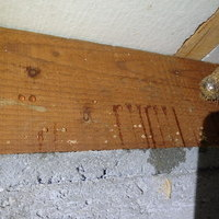 防府市西仁井令にてヤマトシロアリ被害部の駆除と全体の予防工事。のサムネイル
