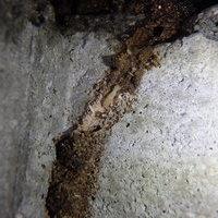 山口市下小鯖にてヤマトシロアリ駆除工事。のサムネイル