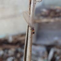 山口市佐山にて白蟻予防工事。このタイミングで本当によかった。のサムネイル