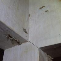 防府市松崎町にてイエシロアリ駆除工事。雨漏りが主な原因。室内に巣が。のサムネイル