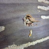 防府市台道にてイエシロアリ駆除工事。まずやっつける、そして安全に防除する。のサムネイル