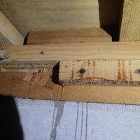 防府市東仁井令町にて白蟻駆除。介護リフォーム中にわかった白蟻被害。なんとヤマトシロアリとイエシロアリ両方いた!!のサムネイル