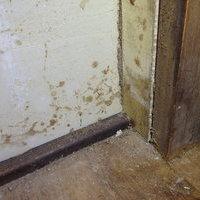 山口市小郡金堀町にてヤマトシロアリ駆除工事。床下が無い構造の被害。のサムネイル