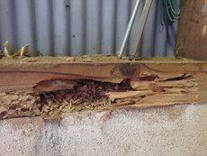 山口市阿知須(土路石)にて、ヤマトシロアリ駆除。農業用倉庫の被害。
