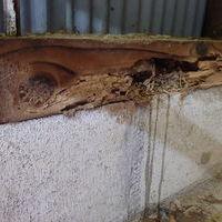 山口市阿知須(土路石)にて、ヤマトシロアリ駆除。農業用倉庫の被害。のサムネイル
