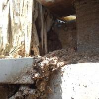 防府市台道にて、イエシロアリ駆除工事。薬剤の伝播効果を実感。根元まで退治。のサムネイル