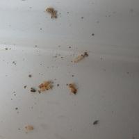 防府市牟礼にてイエシロアリ被害の処置。全体の予防工事。(雨漏りからの被害)のサムネイル