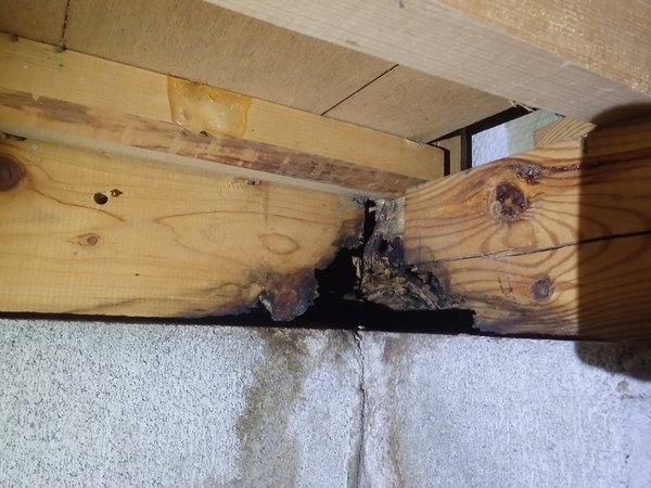 山口市阿知須にて定期的に白蟻予防工事。のサムネイル