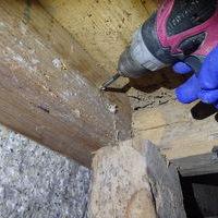 山口市佐山にて、蔵の白蟻駆除。被害や地域的にもカンモンシロアリかと。のサムネイル
