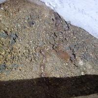 防府市西浦にてヤマトシロアリ駆除工事。家の外の蟻道から被害が発覚。のサムネイル