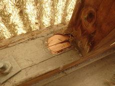 防府市江泊にて白蟻工事のご依頼。差し掛けや外回りにヤマトシロアリがいた!