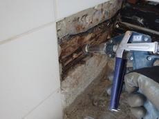 長門市東深川にて、浴室ヤマトシロアリ被害。工務店さんと連携して駆除。