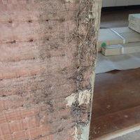 防府市本橋町にてヤマトシロアリ駆除工事。借家の改装中に白蟻被害発覚。のサムネイル