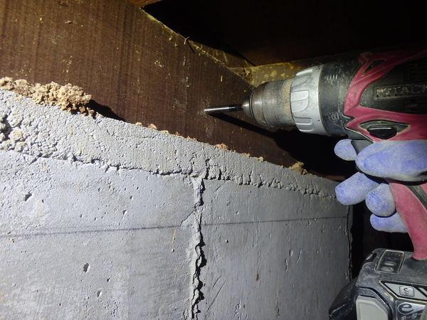 山口市吉敷佐畑にてヤマトシロアリ駆除工事。羽蟻が出現!!のサムネイル