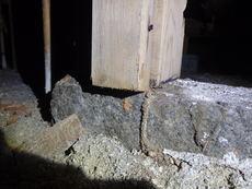防府市東三田尻にてヤマトシロアリ駆除工事。羽蟻大量発生が始まり。