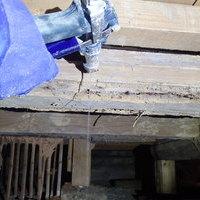 防府市東三田尻にてヤマトシロアリ駆除工事。羽蟻大量発生が始まり。のサムネイル